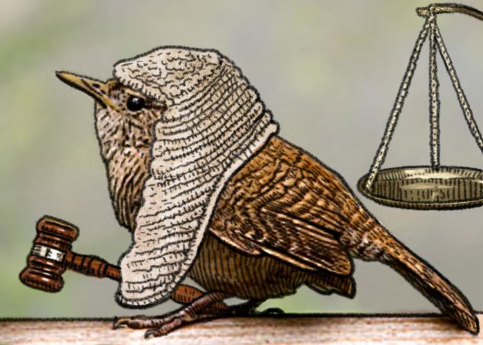 Bird Judge Cute Funny Animals Animal Art Funny Animals