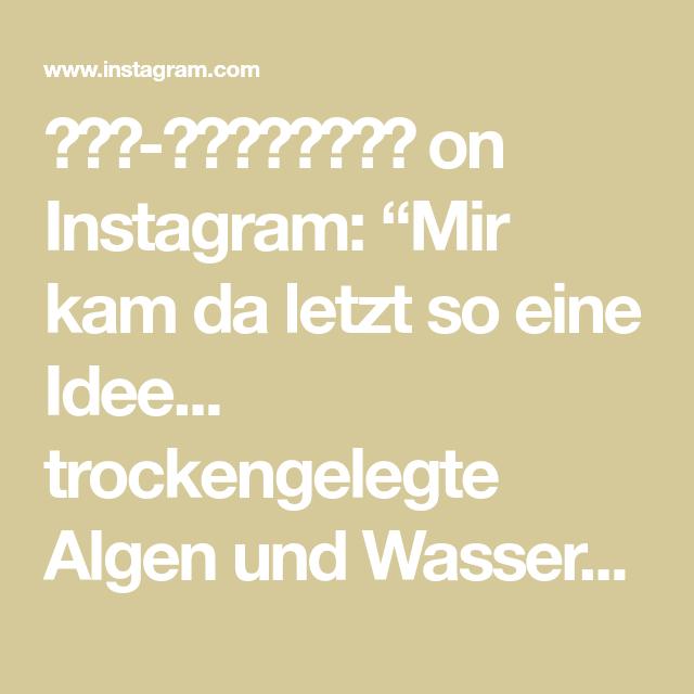 """𝖠𝗇𝗇-𝖢𝗁𝗋𝗂𝗌𝗍𝗂𝗇 on Instagram: """"Mir kam da letzt so eine Idee... trockengelegte Algen und Wasserpflanzen aus Schrumpffolie Mich plagt seit ein paar Tagen ein enormes…"""""""
