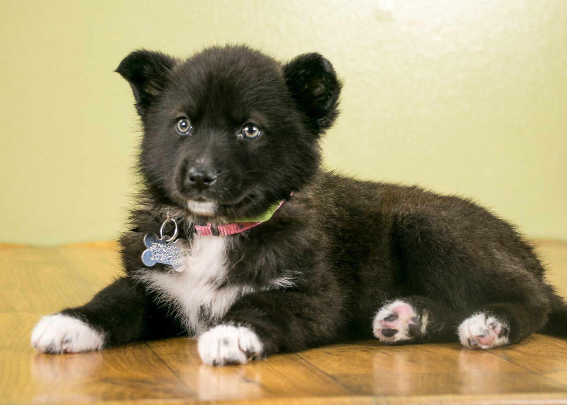 Adopt Zsa Zsa on Petfinder Shepherd dog mix, Dog search