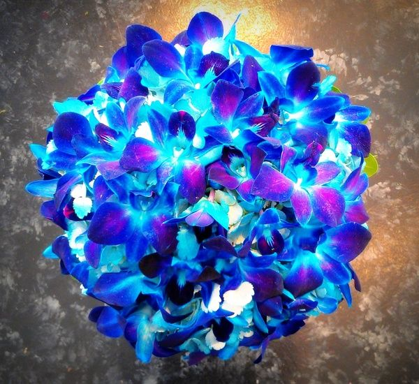 Dyed Blue Dendrobium Orchids, inserted into a Sprayed Teal ...