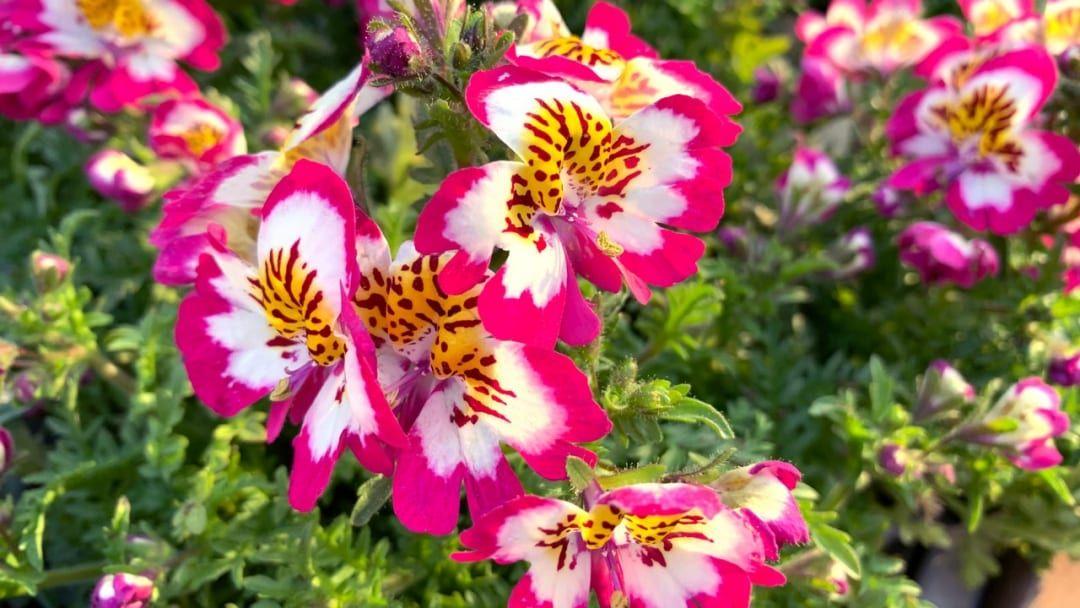 24 Pflanzen Die Viel Sonne Vertragen Und Wenig Wasser Brauchen In 2020 Pflanzen Orchideen Gartnerei