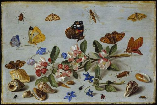 Jan van Kessel I, Butterflies and other insects, 1661.