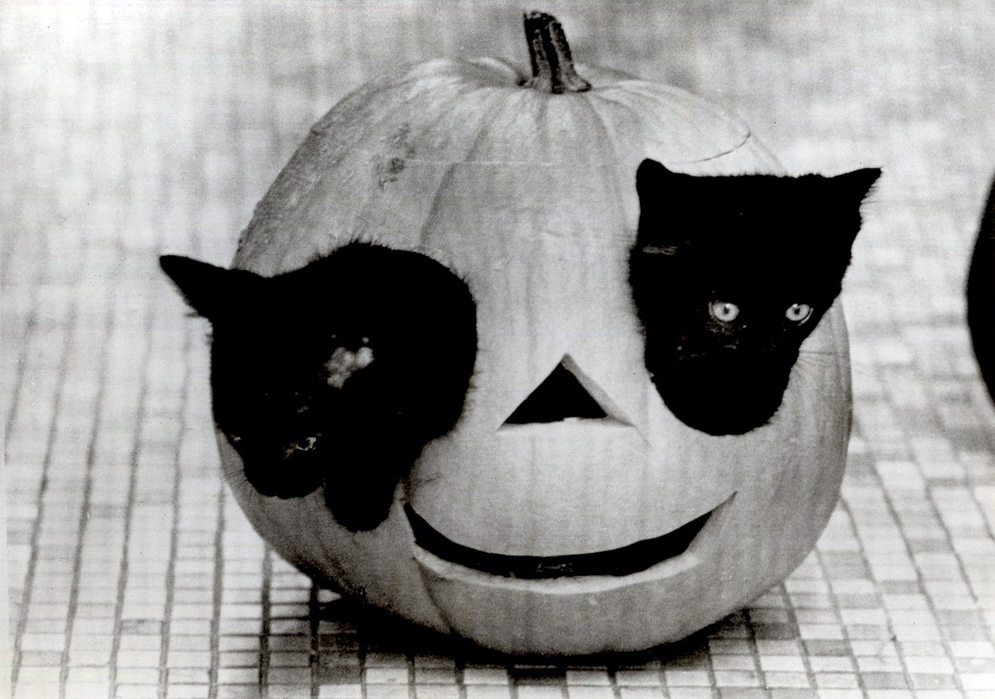Pumpkin with kittens for eyes