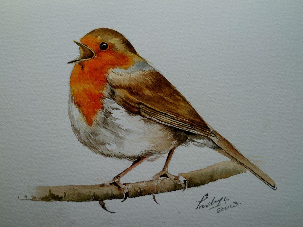 Uncategorized Robin Drawing watercolour robin google search roodborsten pinterest search