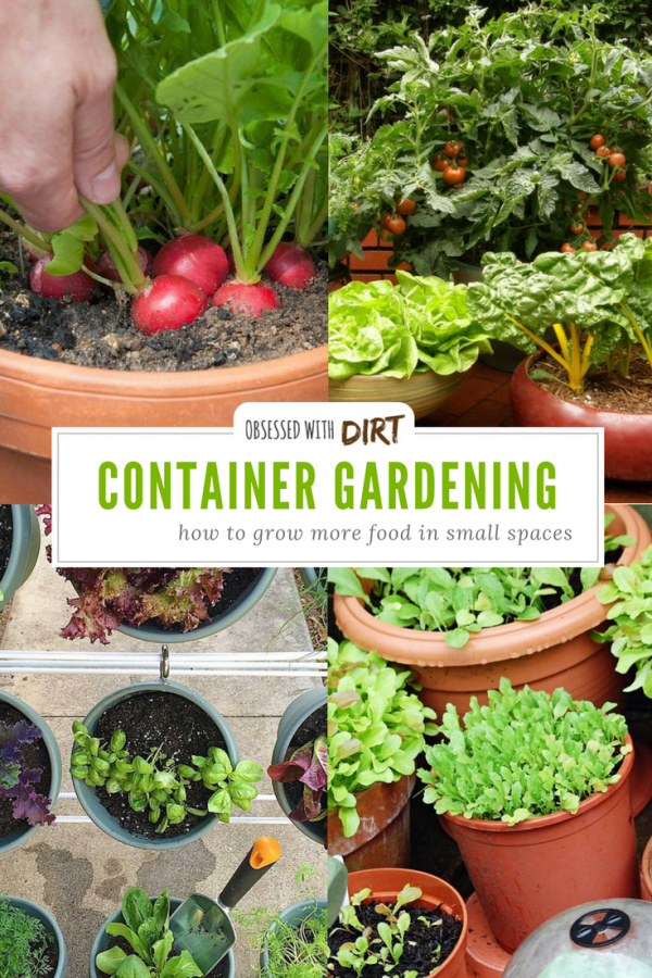 Container Vegetable Gardening Grow More Veggies In Small Gardens