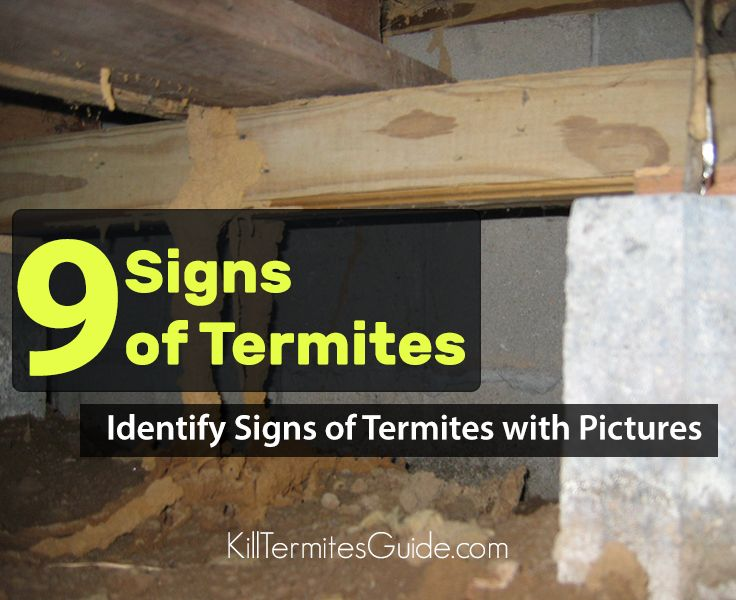 9 Signs of Termites Infestation Signs of termites
