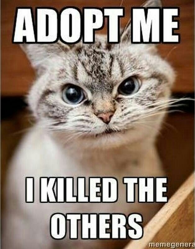Adopt Me I Killed The Others Letsgetwordy Caturday Vampire Cat Silly Cats Funny Animal Quotes