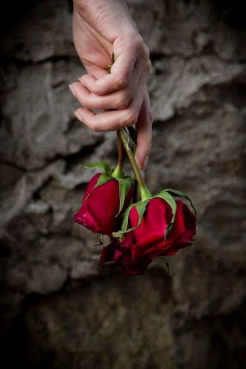 Begsoon Check Out For Beautiful Rose Flowers Love Rose Flower Beautiful Flowers Wallpapers