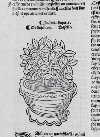 Basil, Basilicon, Baselice- Hortus Sanitatis - Paris - 1500 ca