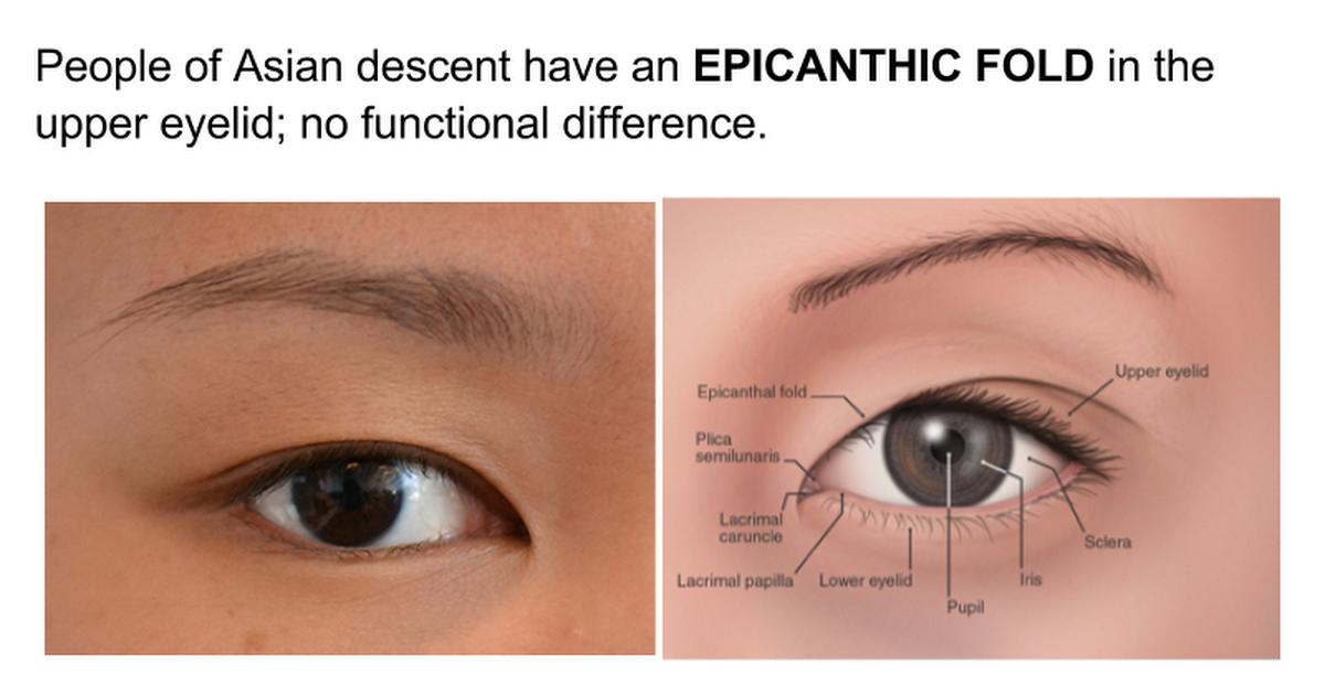 Ch 10 The Eye