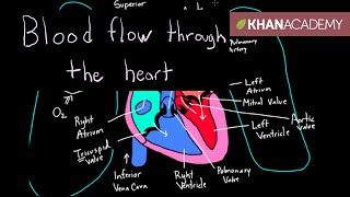 khan academy pediatrics - YouTube | Baby hearts | Heart, Circulatory