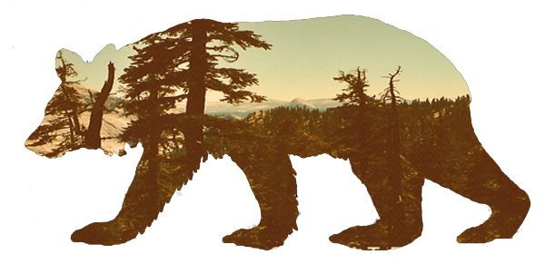 """""""bear with a view"""" fine art figital collage by Julia Williams (2011)."""