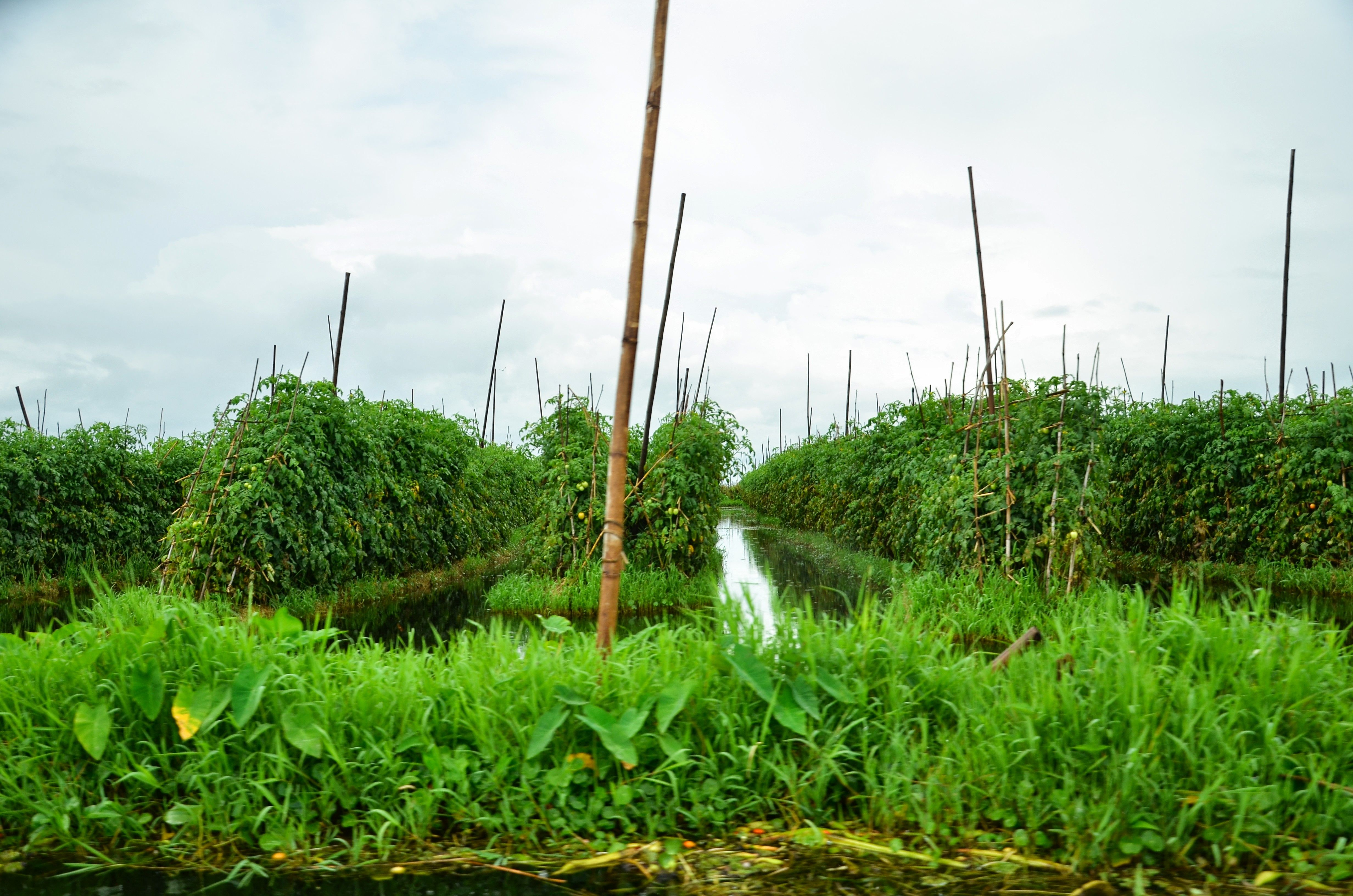 Floating Gardens On Inle Lake Produce The Country S Most 640 x 480