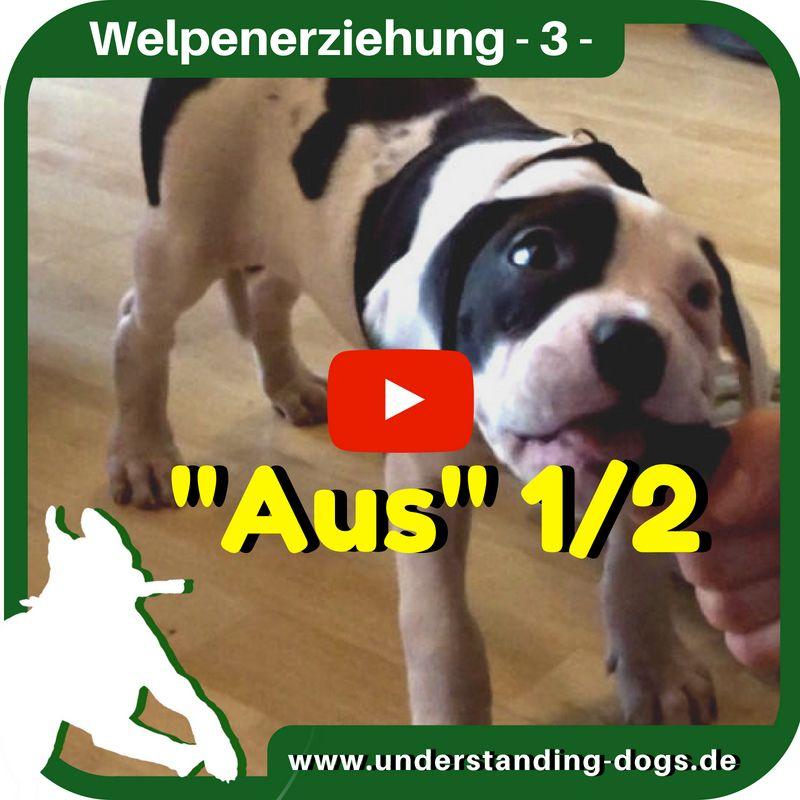 Idee von Marina Klinger auf Hunde in 2020 Welpen, Hunde