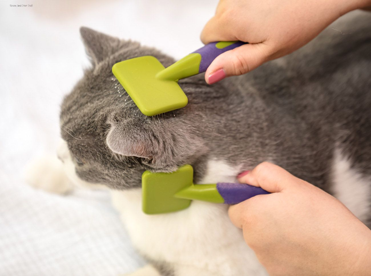 Cat Care Essentials Reviews And Other Stuff In 2020 Cat Care Cat Brushing Pet Brush