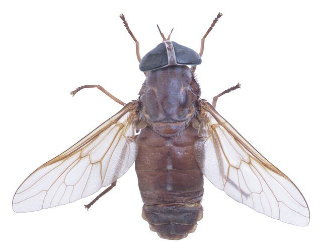 How To Get Rid Of Gnat Like Bugs Coming Out Of The Overflow Hole Of A Bathroom Sink Hunker Get Rid Of Flies Fly Infestation Water Retention Remedies