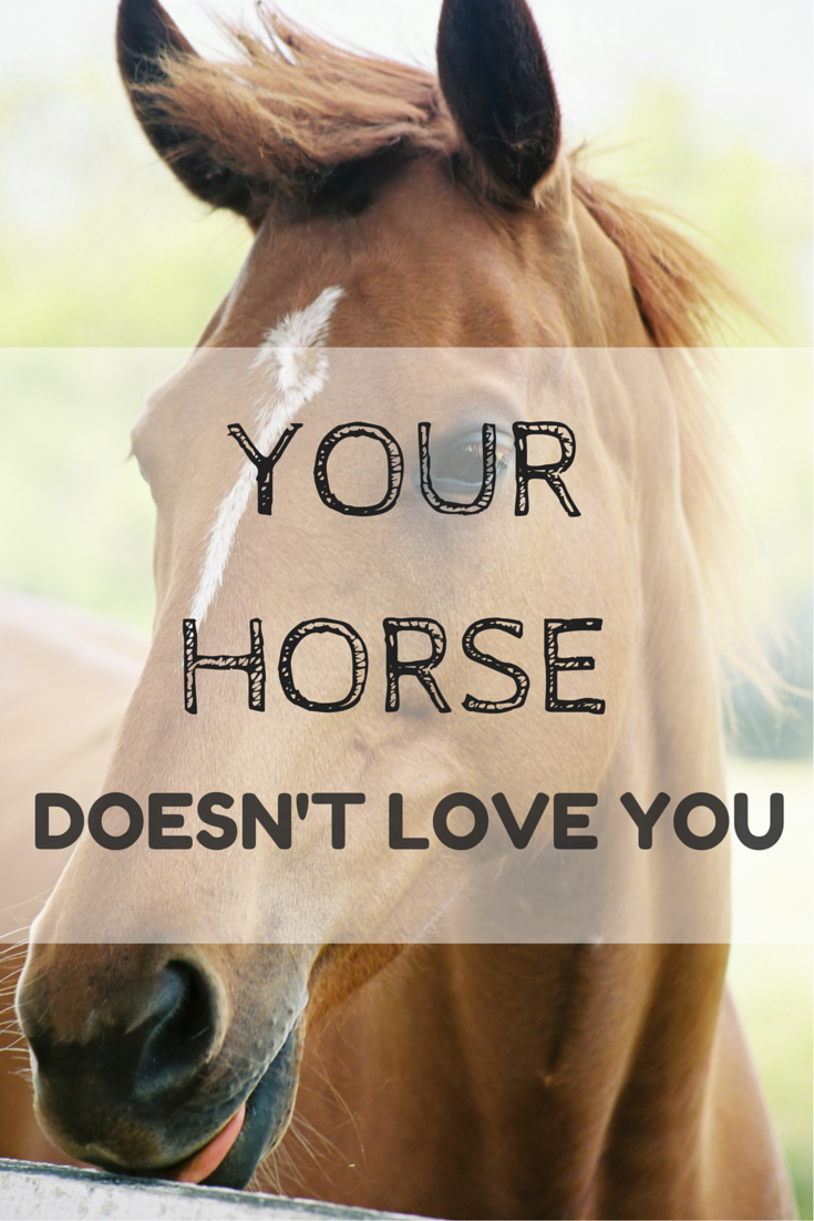 Sorry... but your horse doesn't love you.