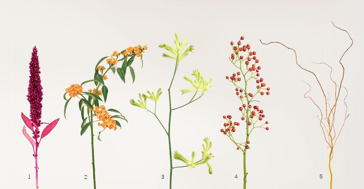 Anigozanthos (3) Rose Hip (4) Amaranthus (1) Euphorbia fulgens (2 ...