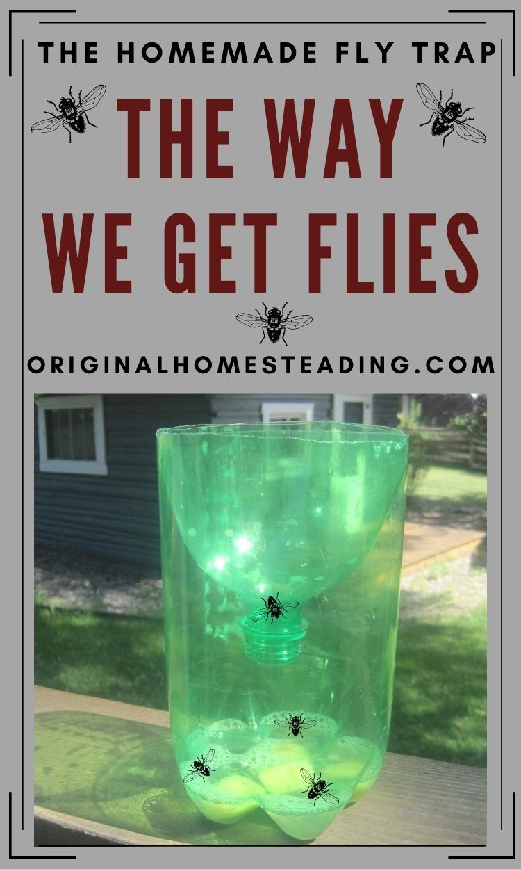 Simple Homemade Fly Trap in 2020 Diy fly trap, Fly traps