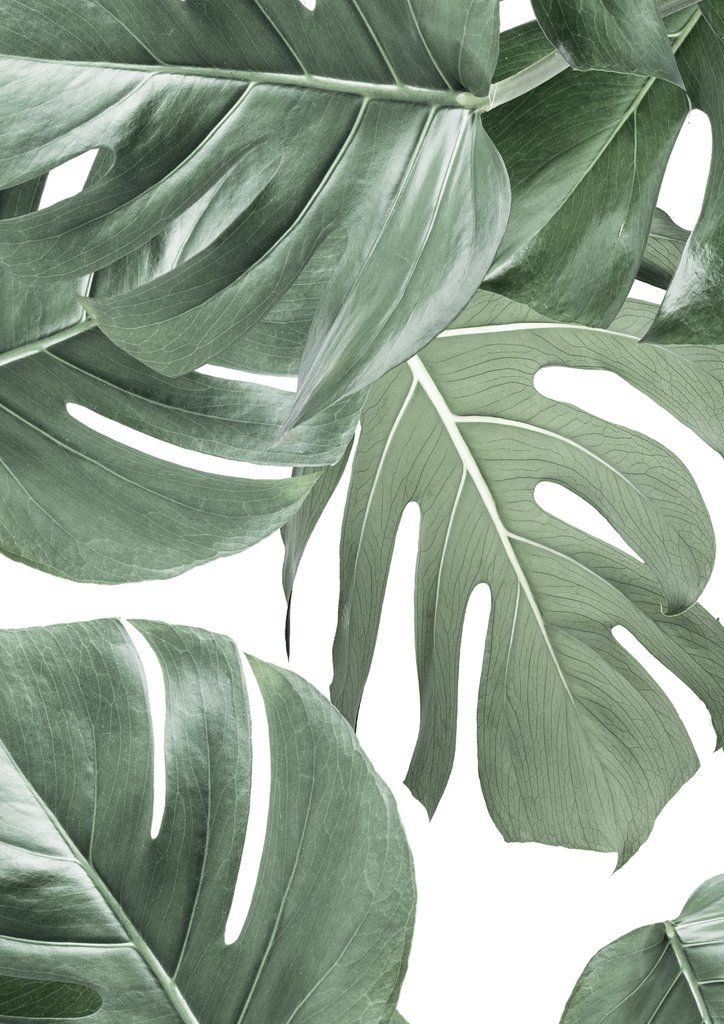 Botanical Wallpaper Monstera White by KEK Amsterdam