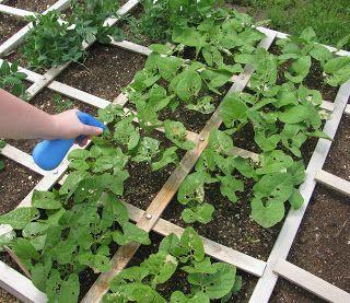 The Harried Homemaker Preps: Homemade Bug Repellent for Your Garden