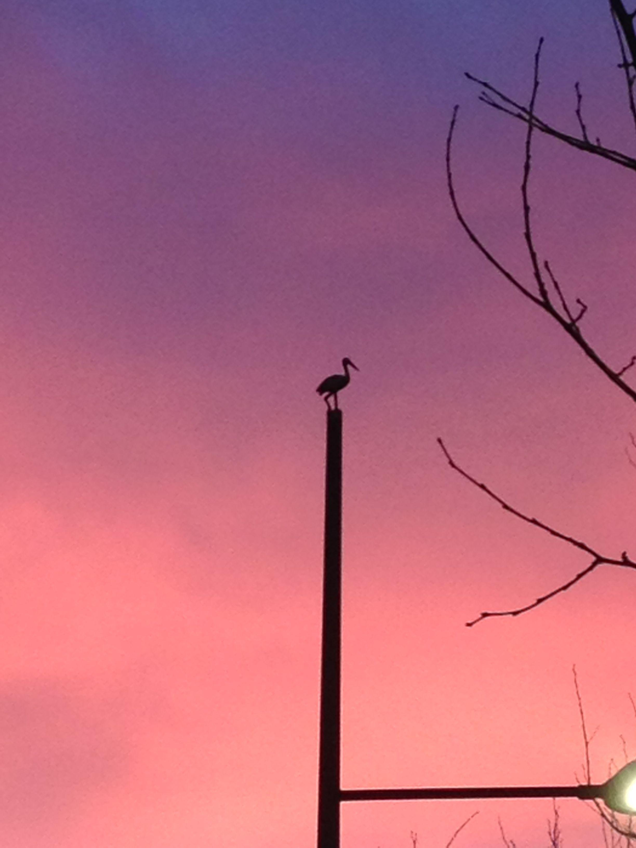 Vogel op de lichtmasten aan de Turfmarkt (Haagse loper)