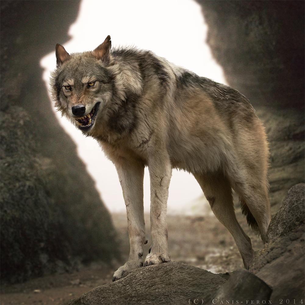 фото с видом злых волков омске вторая бухгалтер