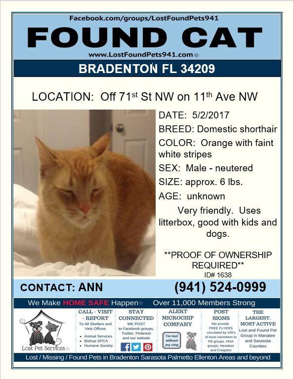 Do You Know Me Foundcat Lost Cat Ginger Orangetabby Bradenton Fl Manateecounty Share Lostpetservices Found Cat Manatee County Orange Tabby