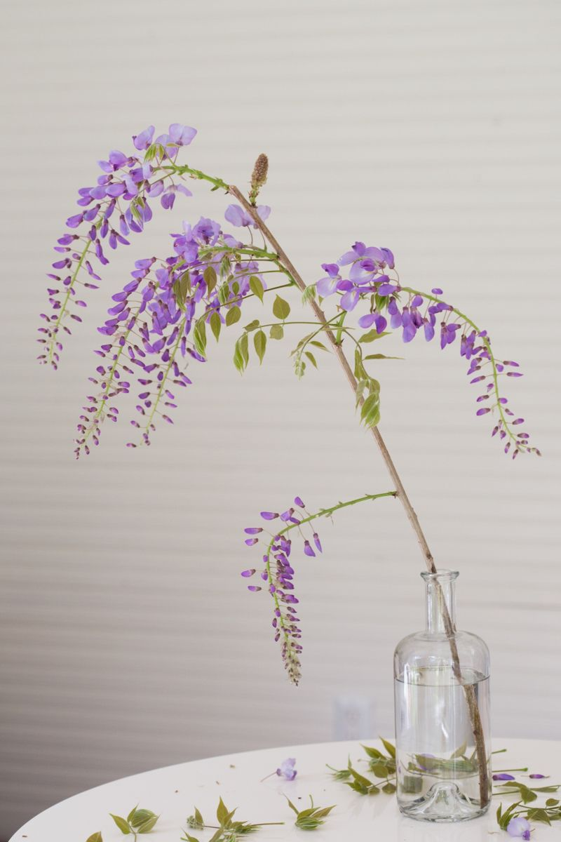 Mysterious Wisteria An Irresistible Flower Goes From Vine To Vase Vase Wisteria Flowers