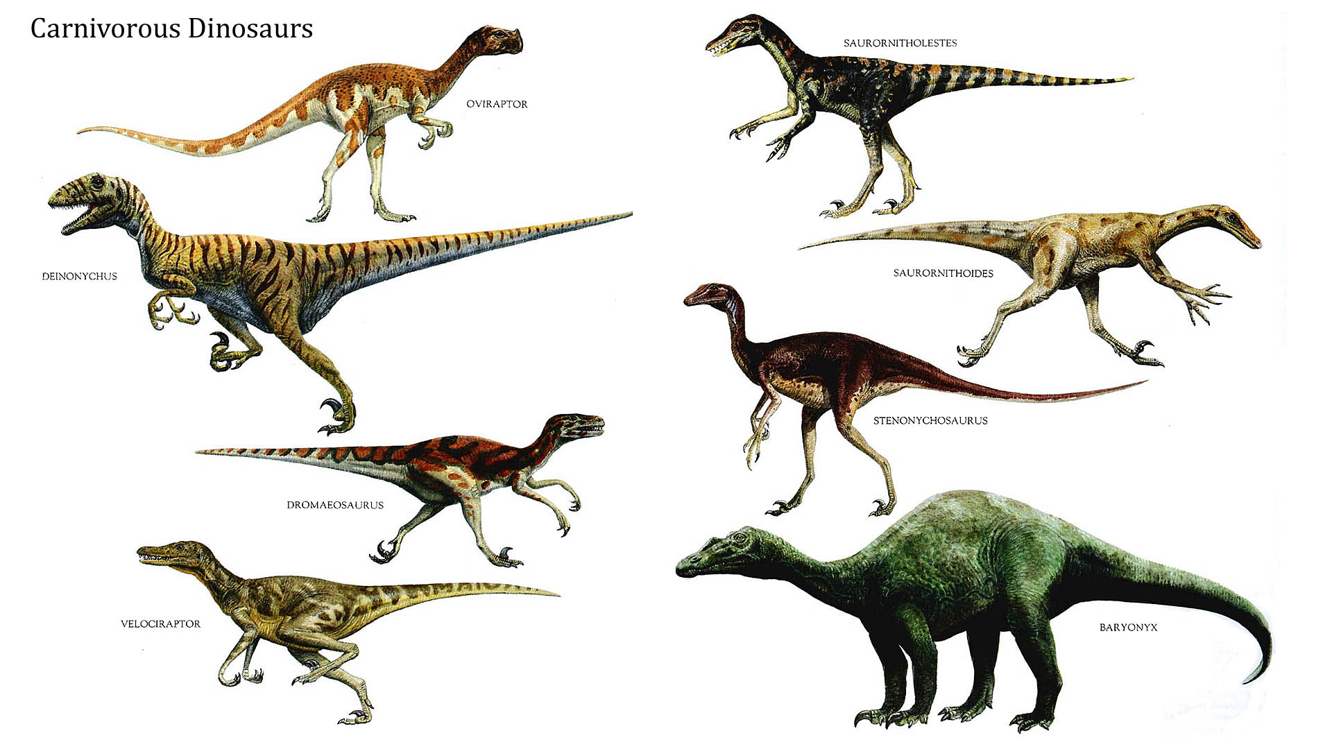http//ayay.co.uk/background/dinosaurs/carnivore/large