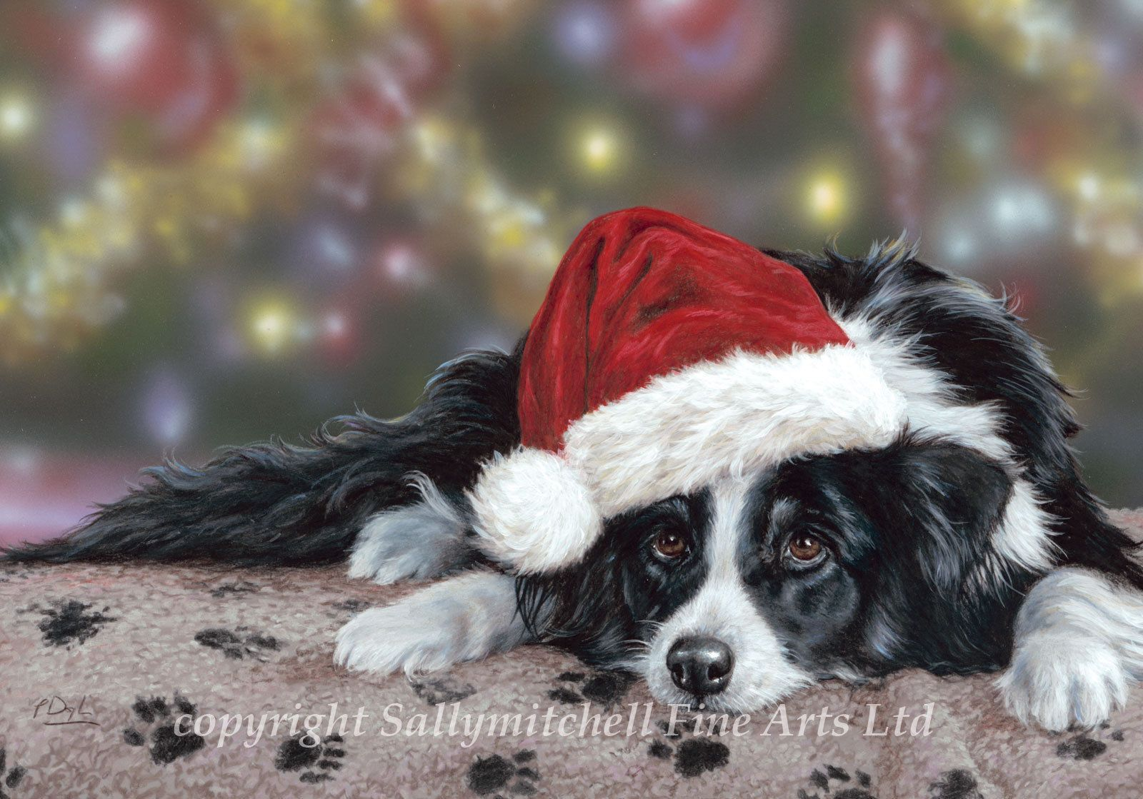 5.99 GBP - Border Collie, Working Collie, Christmas Cards Pack Of 10 ...