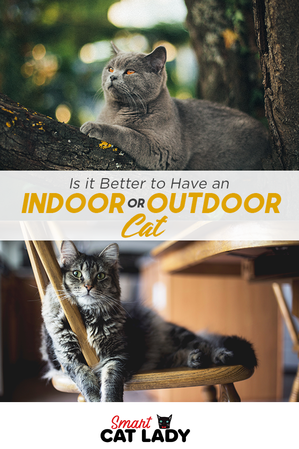 Indoor Vs Outdoor Cat Is It Better To Have One Or The Other Is It Cruel To Keep A Cat Inside What S The Life Expectancy Of An Outdoor Cats Cats