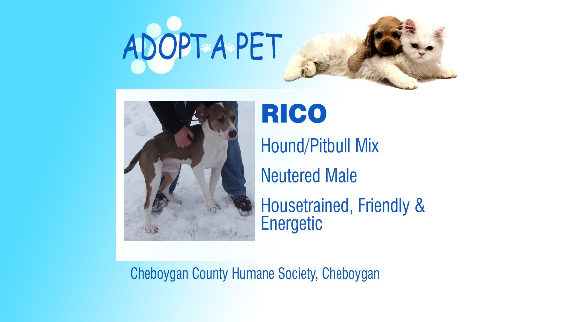 Adopt a Pet Tuesday Rico, Layna & Lady Northern