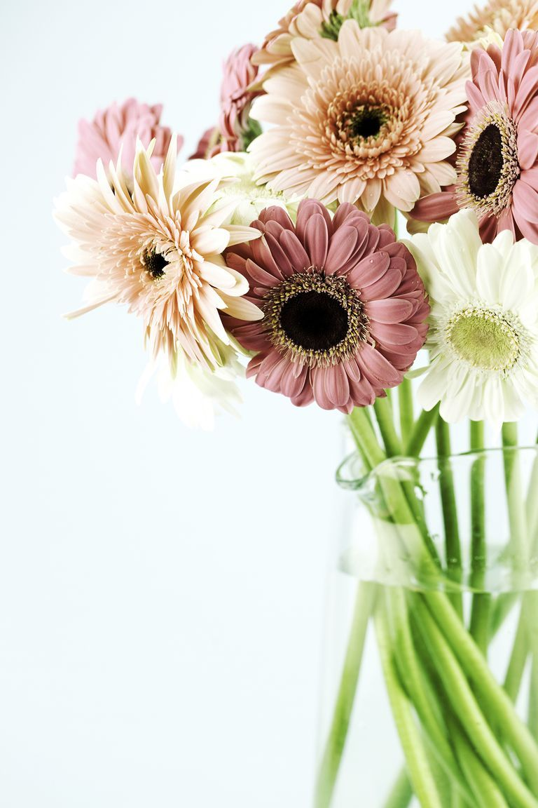 The Meaning Behind Popular Valentine S Day Flowers Gerbera Flower Flower Meanings Flowers