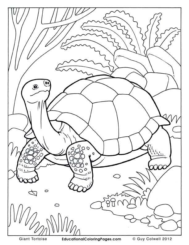 Marvelous Tortoise Coloring Pages, Tortoise Colouring