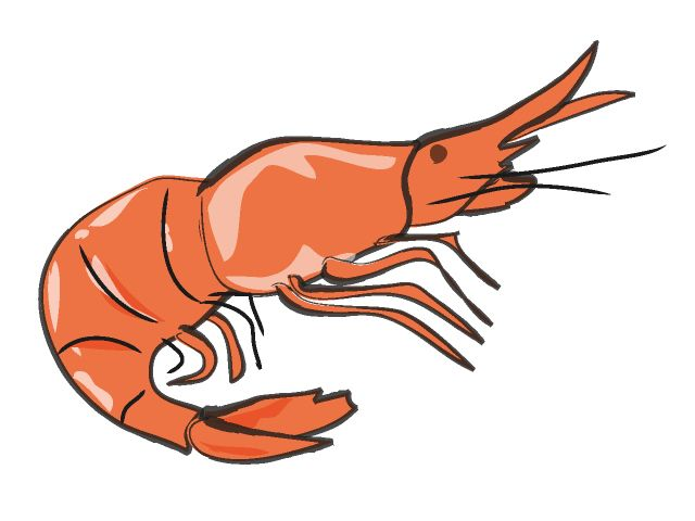 shrimp clipart line drawings pinterest prawn shrimp Latin Night Clip Art Muffaletta Sandwich Clip Art