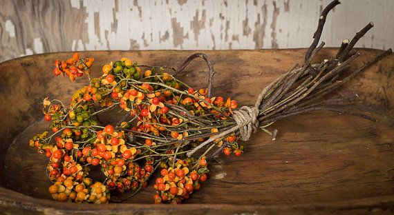 Bittersweet Vine , Dried Flowers, Fall Bittersweet  , Bittersweet Berries ,  Bittersweet Etsy, Bittersweet Branches, Halloween Decoration