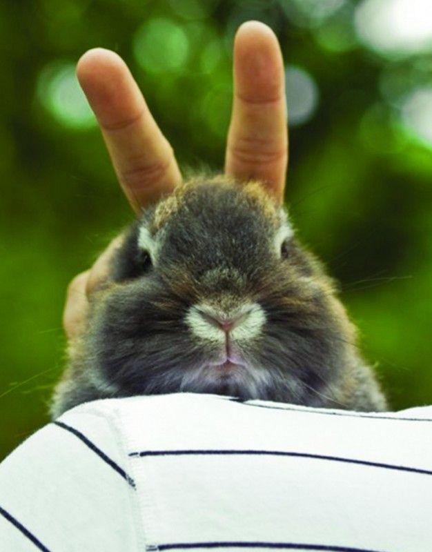 Картинки кролик прикольные