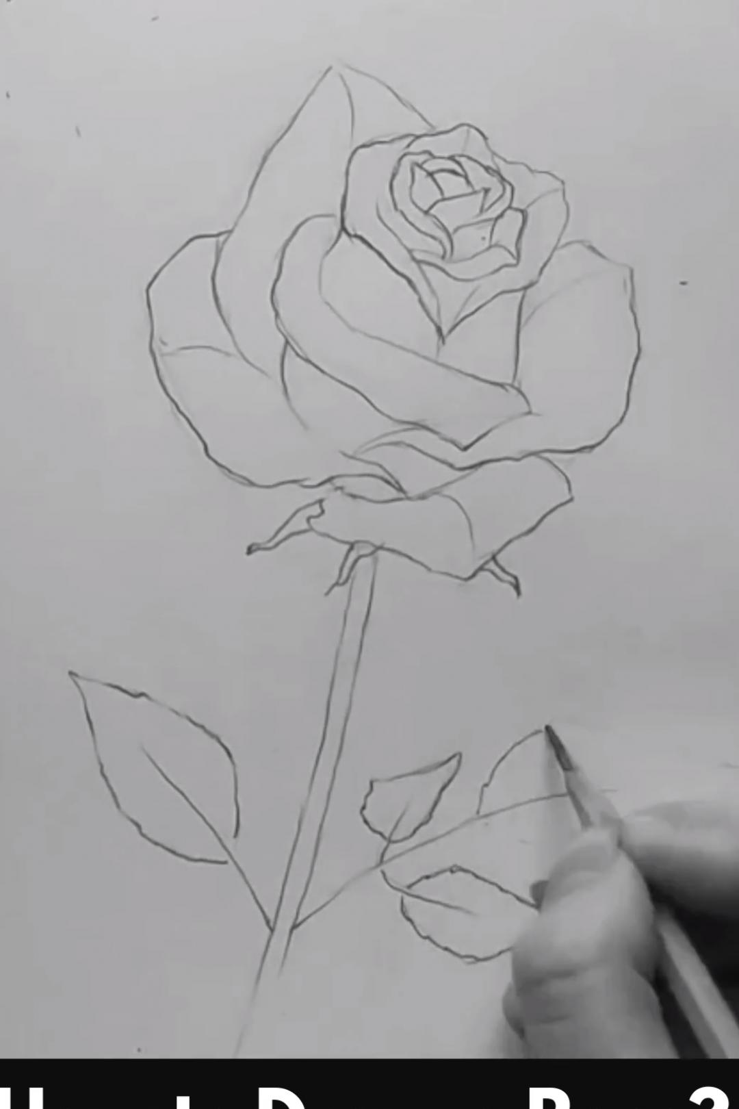 Zeichnung Zeichentipps Zeichnungen Bleistift In 2020 Simple Flower Drawing Flower Drawing Drawings