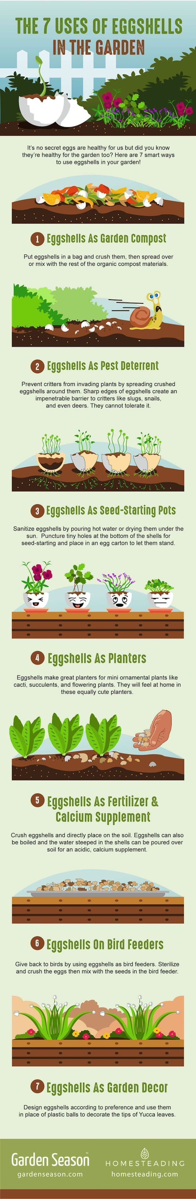 How to use eggshells in the garden costcutting gardening hacks
