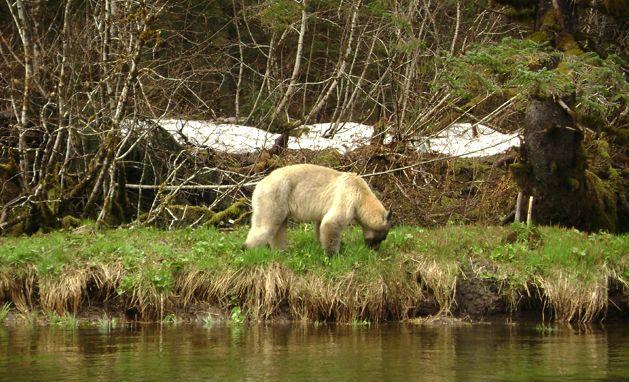 Glacier Bear Lodge Alaskan Vacation Packages Glacier Bear Lodge Specials Alaskan Vacations Bear Vacation