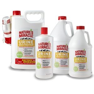 Getting Rid Of Odors wondering how to get rid of urine odor and smell in your carpet