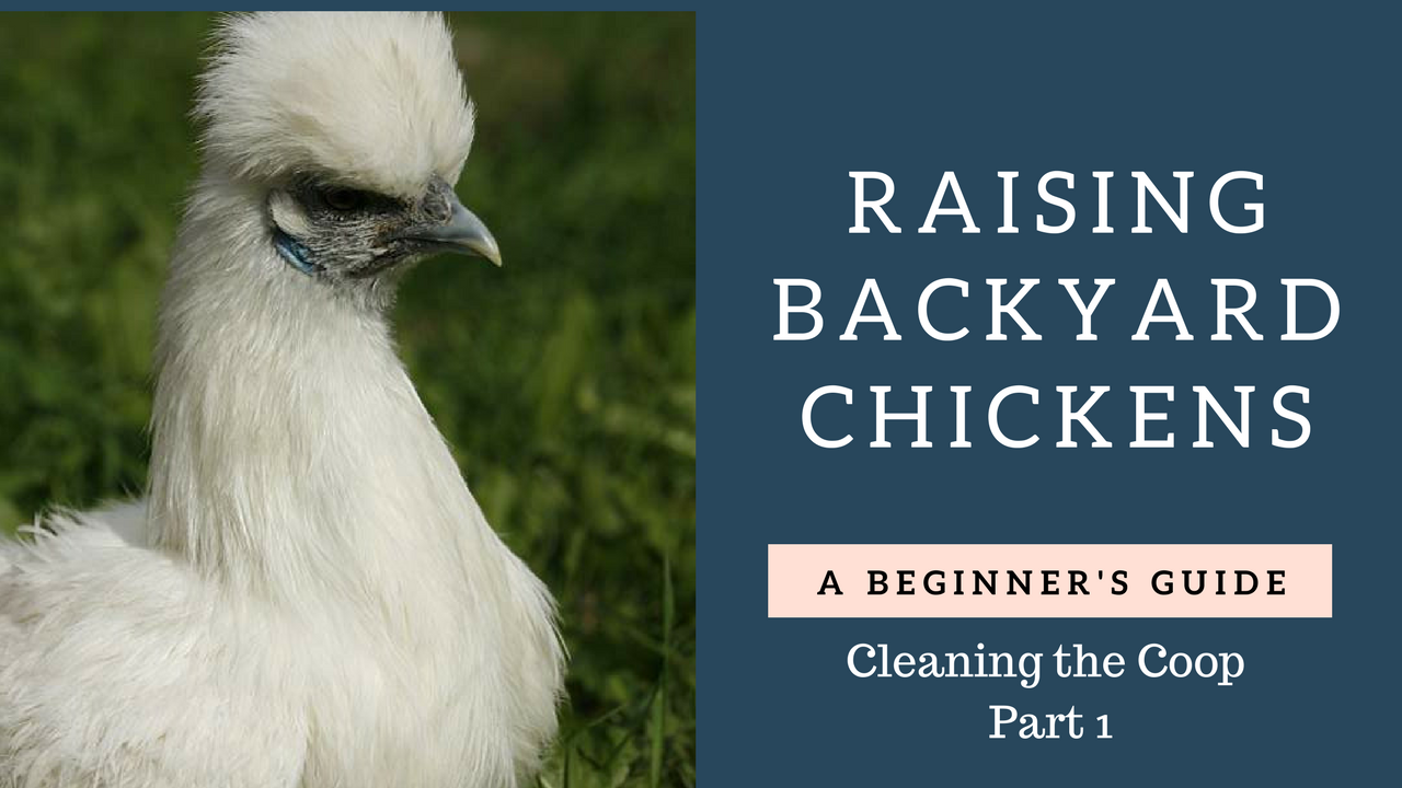 Thinking of getting backyard chickens? This beginners