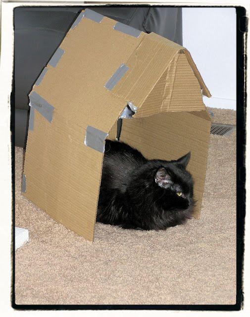 Loves her cardboard home