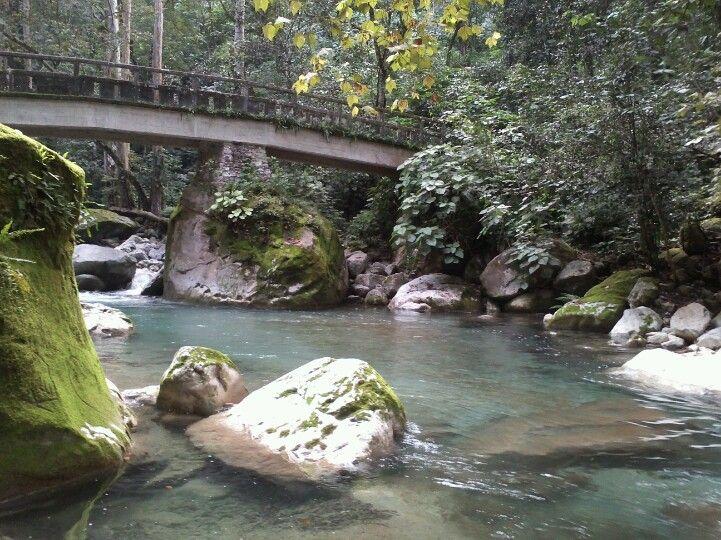 Puente y arroyo
