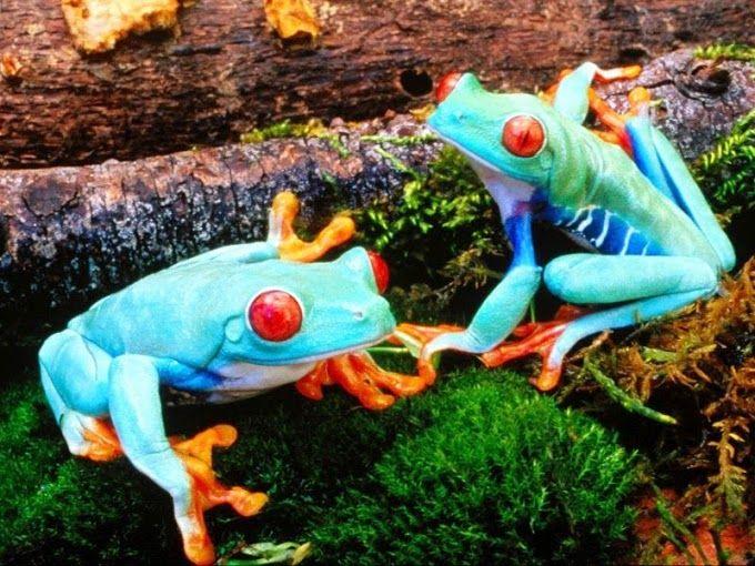 Ranas paleta de colores | Animales | Pinterest | Paletas de colores ...