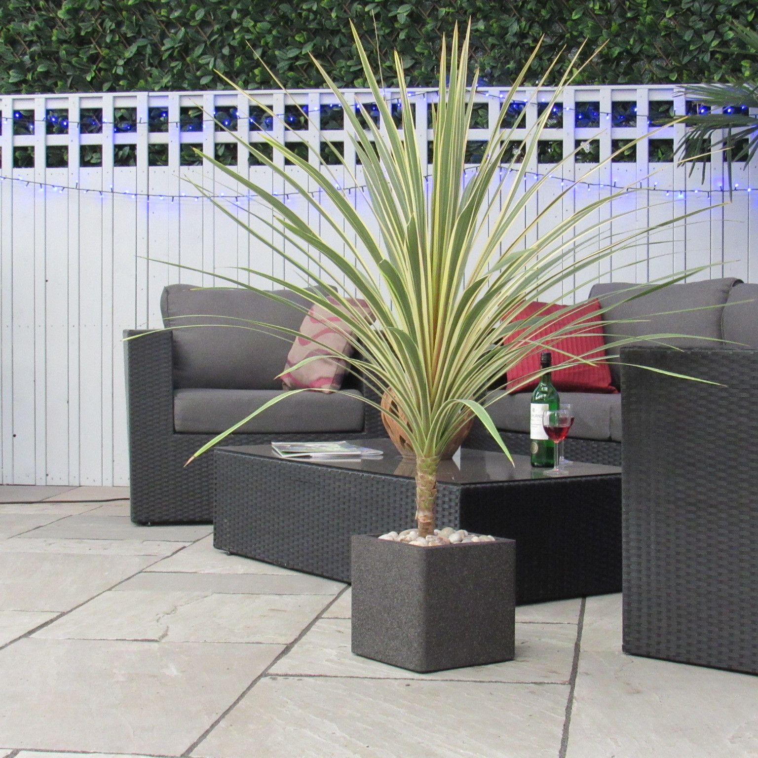 Large Cordyline Australis Torbay Dazzler Unique Rare Patio Planter Complete As Shown Trees Baytreeweddin Patio Planters Garden Spaces Outdoor Plants