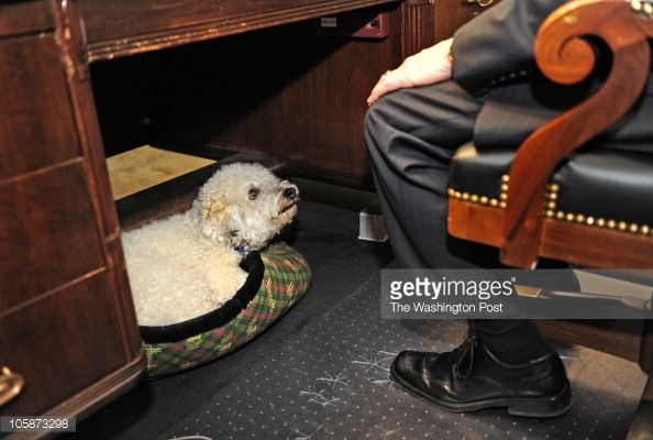 Capitol HIll is a home away from home for some dogs when their owners bring them to the office. : News Photos