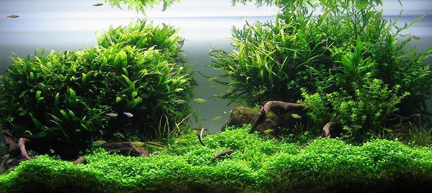 50 Best Aquascape Inpiration | Aquascape, Inspiration ...