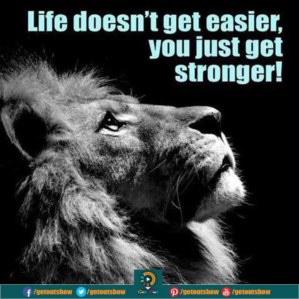Get Out (GetOutShow) Twitter Lion profile, Lion, Animals